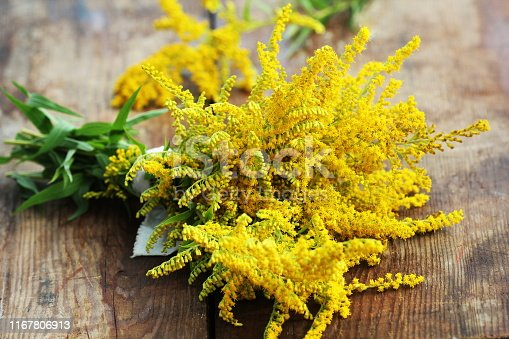Bunch of yellow Solidago Goldenmosa or Goldenrod on wooden background .