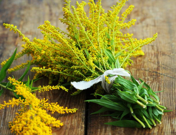 Bunch of yellow Solidago Goldenmosa or Goldenrod on wooden background stock photo