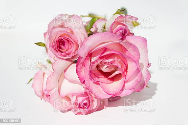 Bunch pink roses on white background picture id500135492?b=1&k=6&m=500135492&s=612x612&h=heewv v8t9ywgbtavtmrmzg1iwbxgthnrpqmzwaighw=