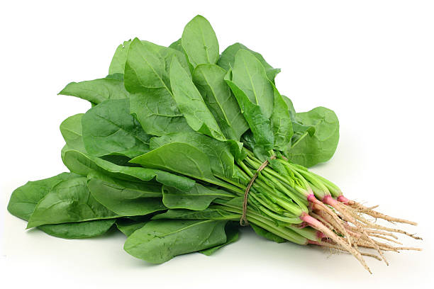 Bunch spinach stock photo