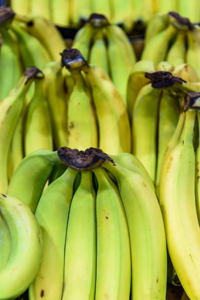 bunches of bananas stock photo