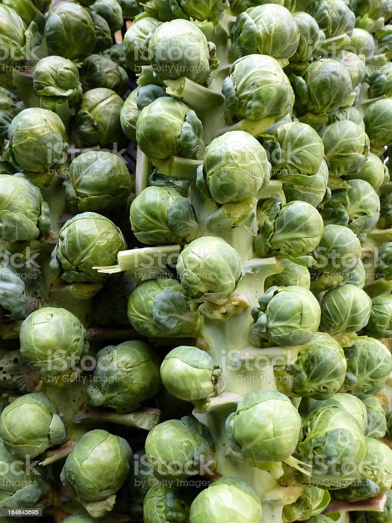 Bunches of Brussel Sprouts royalty-free stock photo