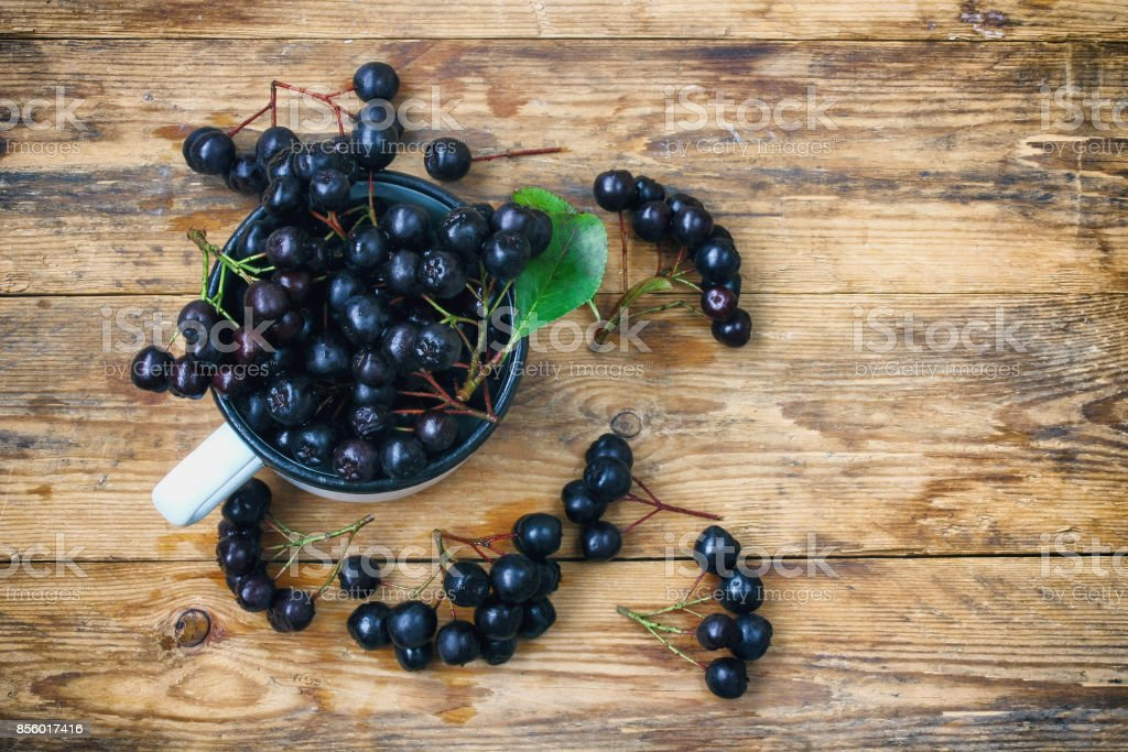 bunches of chokeberry in cup stock photo