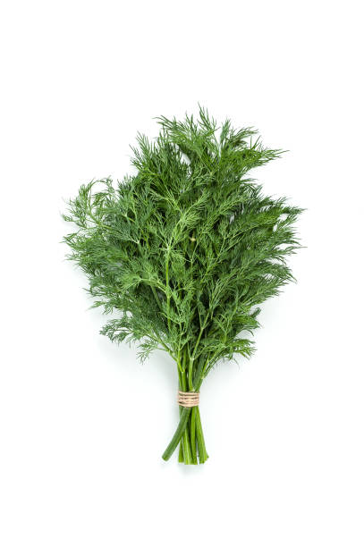 Bunches of fresh dill on a white background isolated. Bunches of fresh dill on a white background isolated. dill stock pictures, royalty-free photos & images