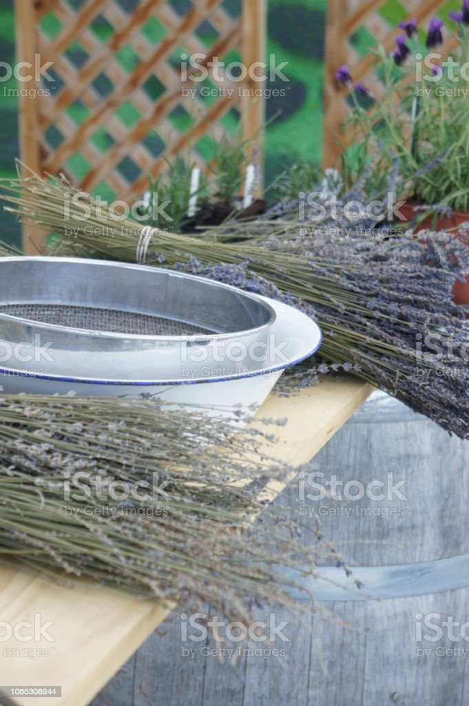 Bunches of freshly harvested lavender on a table with a wash basin in a garden stock photo