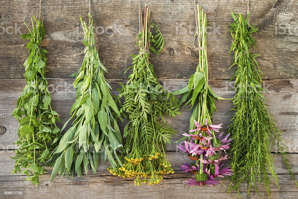 bunches of healing herbs on wooden wall stock photo