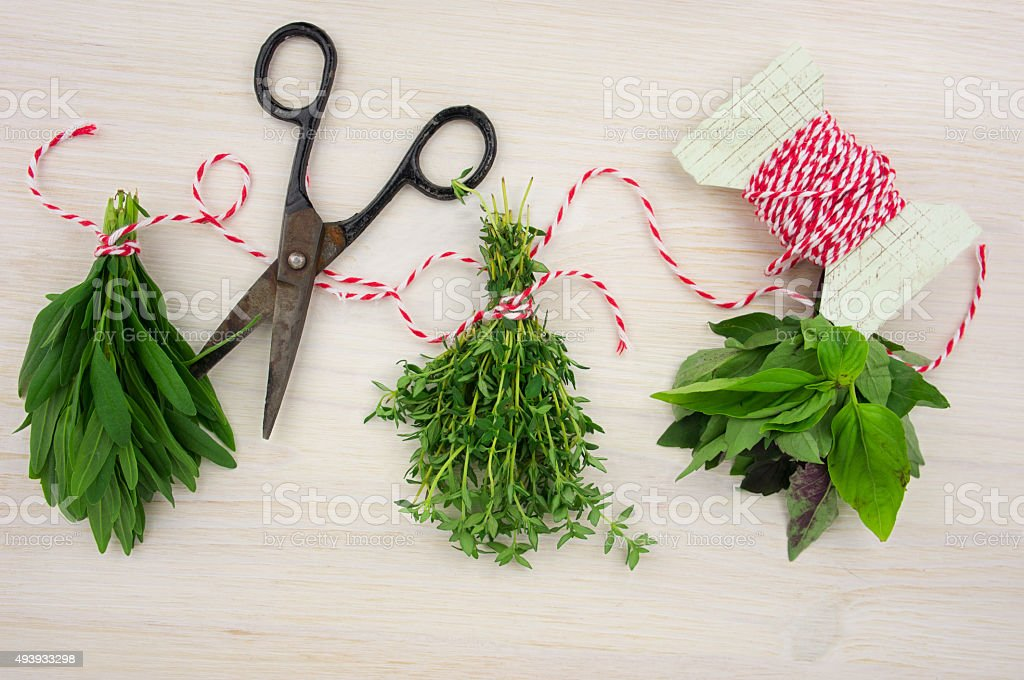 Bunches of herbs with old-fashioned scissors stock photo