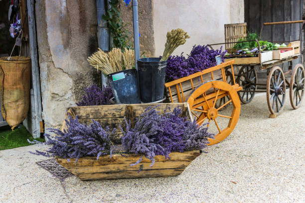 bunches of lavender for sale on the street stock photo