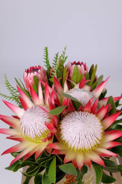 bunches von proteas - protea strauß stock-fotos und bilder