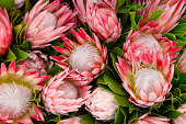 Bunches of Proteas