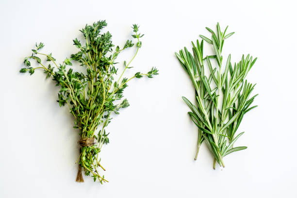 bunches of tied thyme and rosemary on white background isolated - herb stock photos and pictures