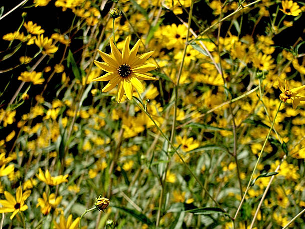 Bunches of Wildflowers stock photo