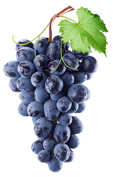 bundle of blue grapes with a leaf against white background - 提子 個照片及圖片檔