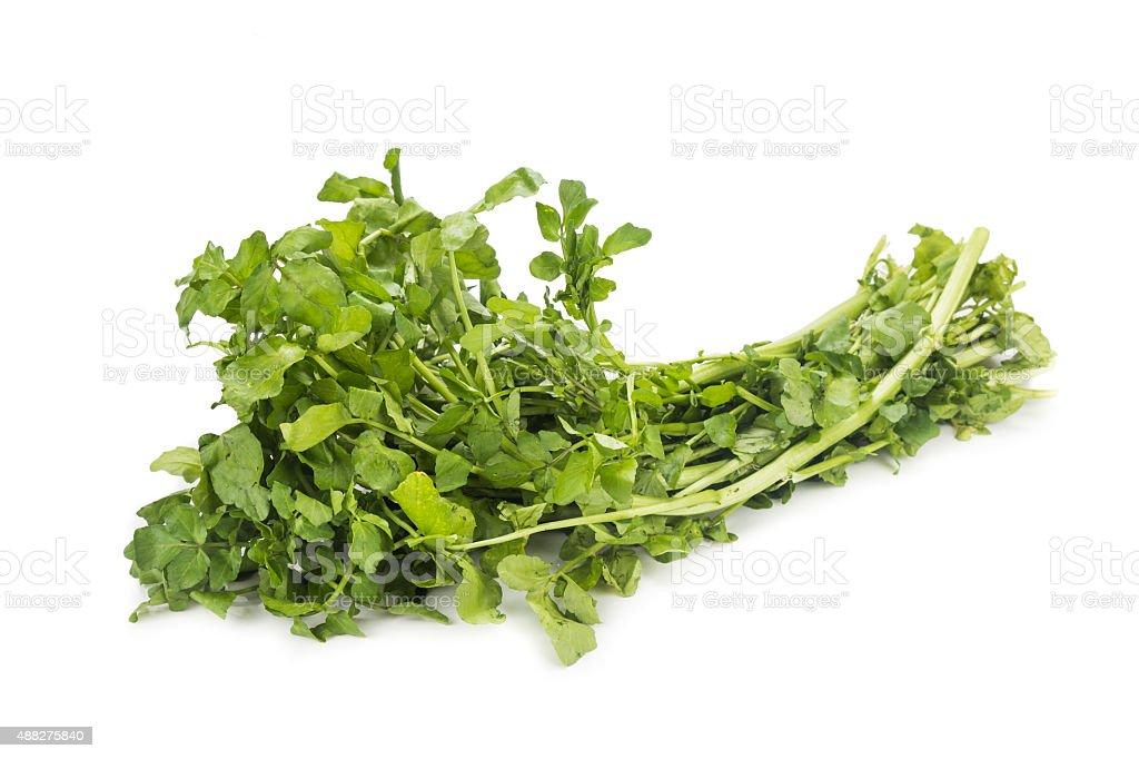 Pacote de recém-colhidas agrião rica em vitaminas e aos nitratos - foto de acervo