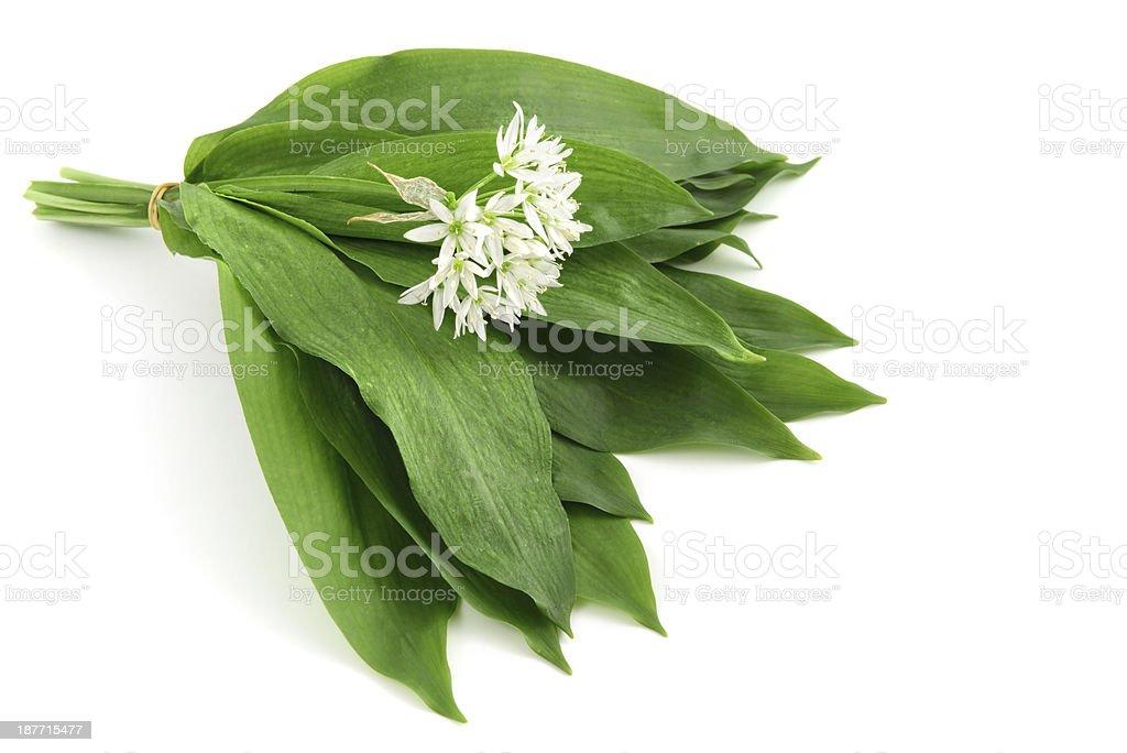 A bundle of garlic, Allium Ursinum stock photo