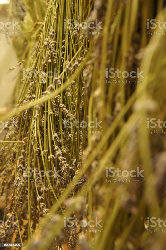A bundle of harvested lavender hangs to dry stock photo