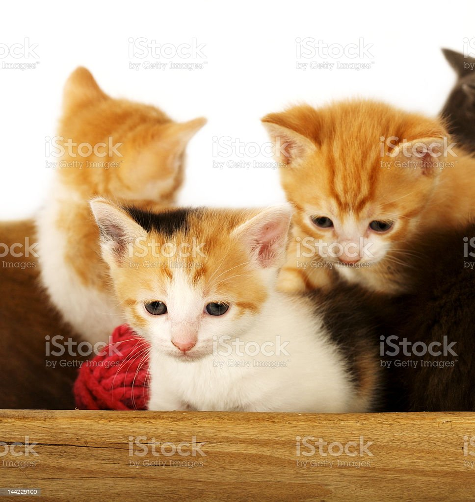 Bundle of Kittens royalty-free stock photo