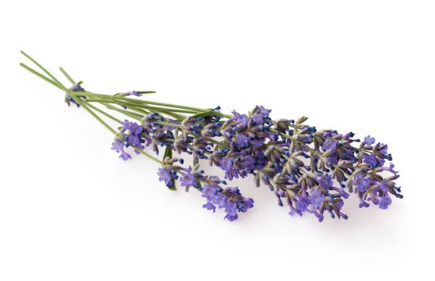 Bundel van lavendel geïsoleerd op witte achtergrond foto