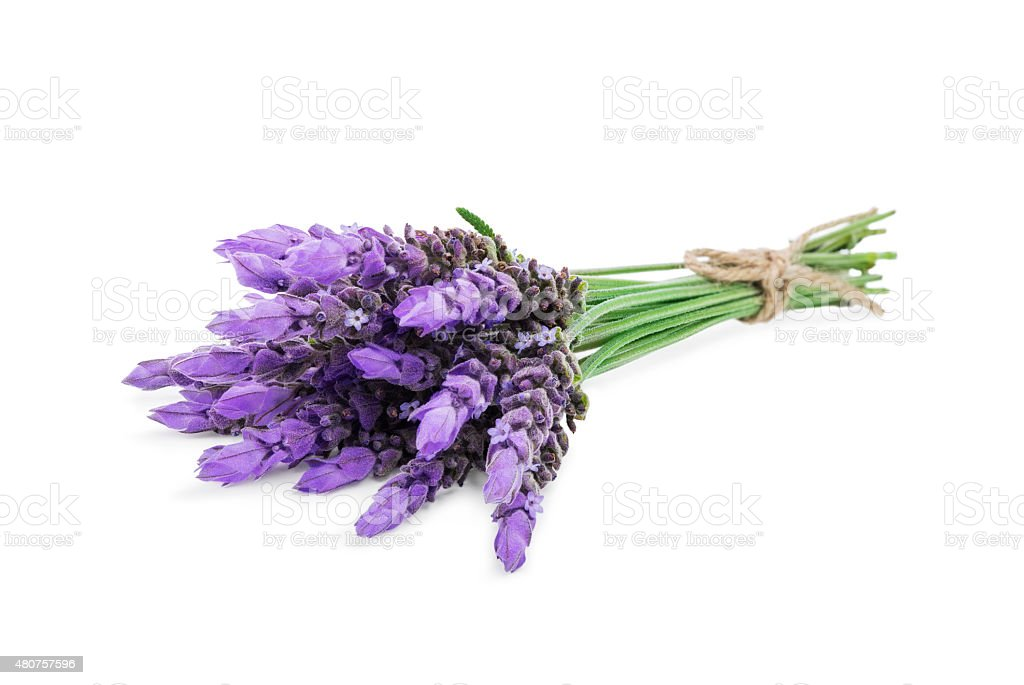 bundle of lavender stock photo