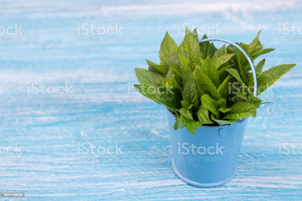 Bundle of mint in small bucket on blue wooden background. Copy space. Top view. royalty-free stock photo