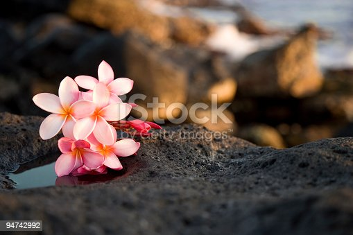Photograph of Hawaiian frangipani (plumeria) flowers found in Kauai, Hawaii laying on lava rocks with ocean in background; soft, pretty flowers on rugged lava rock toward lower left corner and bottom of frame; copy space