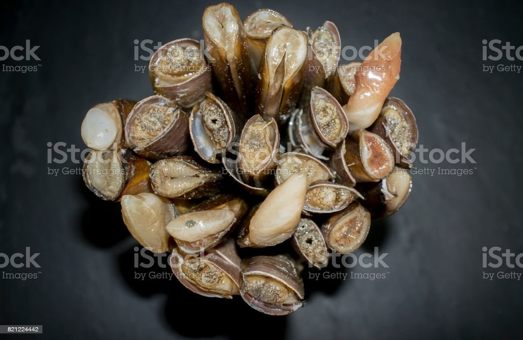 Bundle Of Razor Clams Stock Photo & More Pictures of Blank | iStock