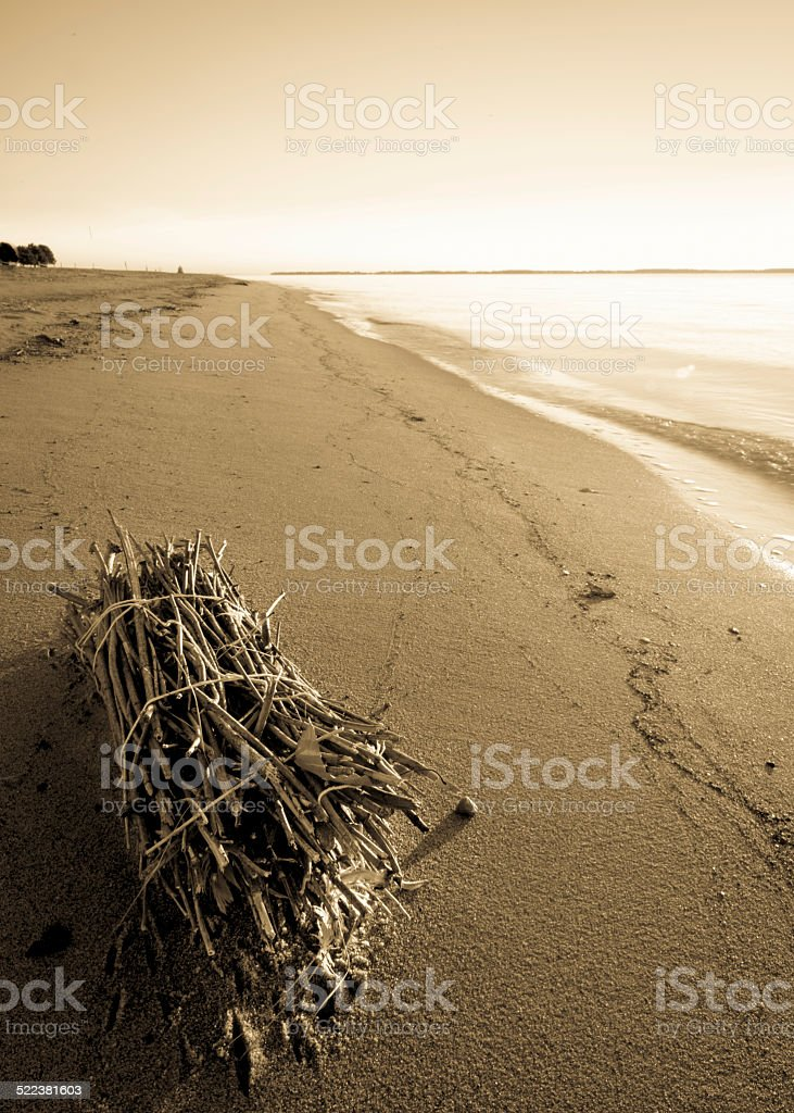 Bundle of Twigs on the Beach royalty-free stock photo