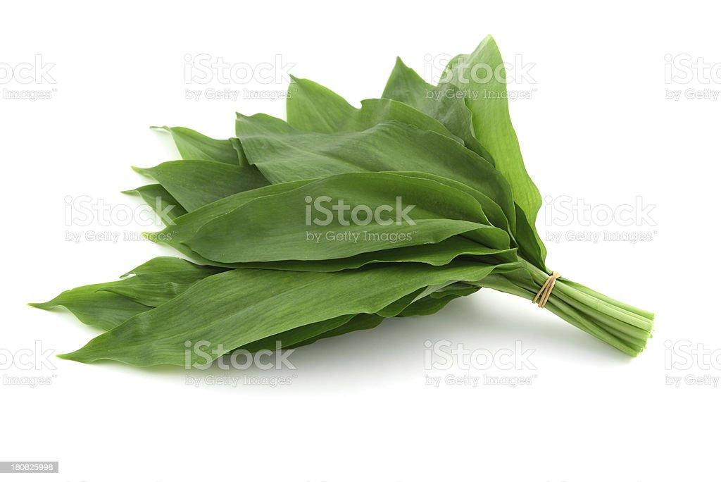 bundle of  wild garlic (Allium ursinum) stock photo