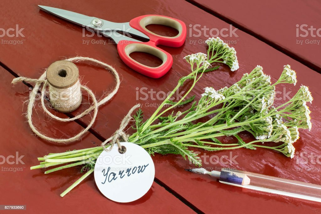 Bundle of yarrow (achillea millefolium) with label stock photo