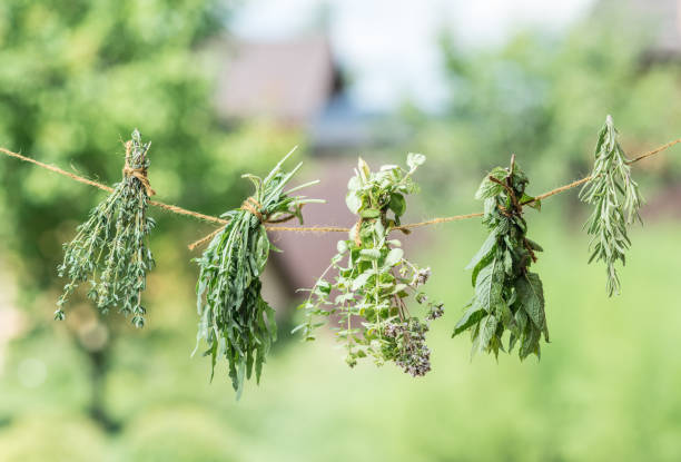 bündel aromatisierter kräuter trocknen im freien. - thymian trocknen stock-fotos und bilder