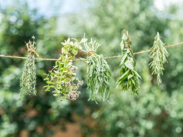 bündel von aromatisierten kräuter trocknen an der frischen luft. - thymian trocknen stock-fotos und bilder