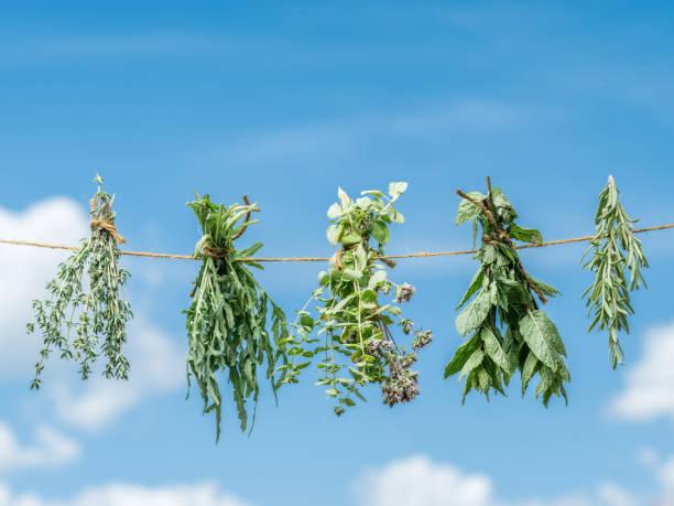 bündel von aromatisierten kräuter trocknen an der frischen luft. himmelshintergrund. - thymian trocknen stock-fotos und bilder