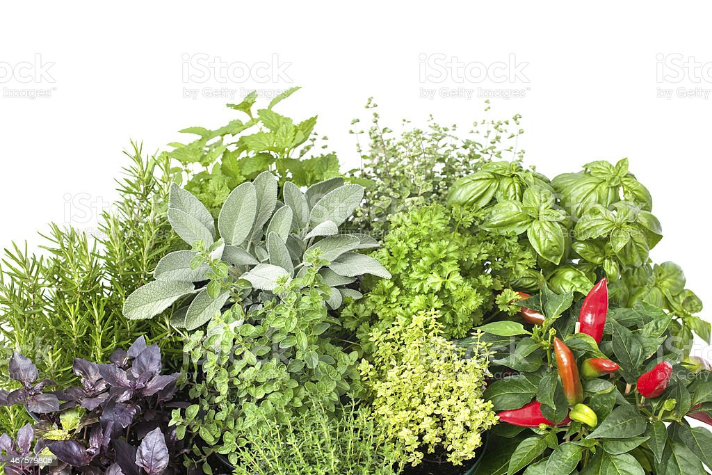 Bundles of fresh herbs on a white background stock photo