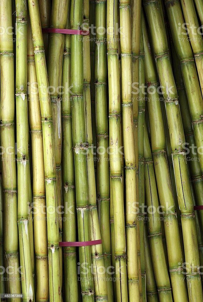 Bundles of Fresh Sugar Cane stock photo