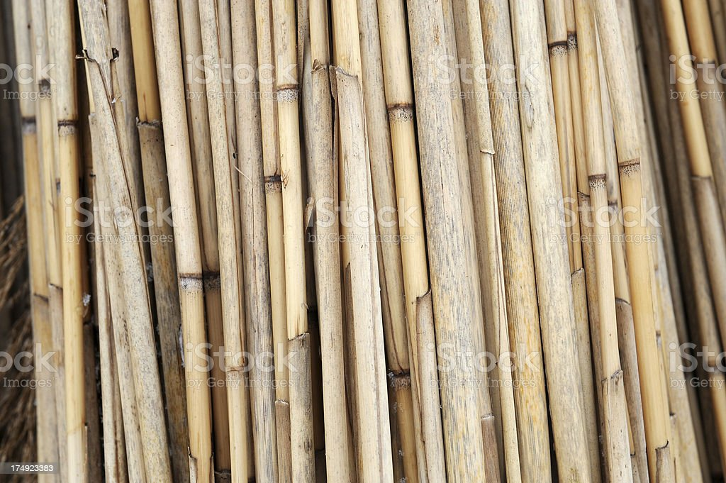 Bundles of reed royalty-free stock photo