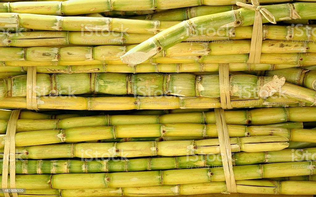 Bundles of Sugar Cane stock photo