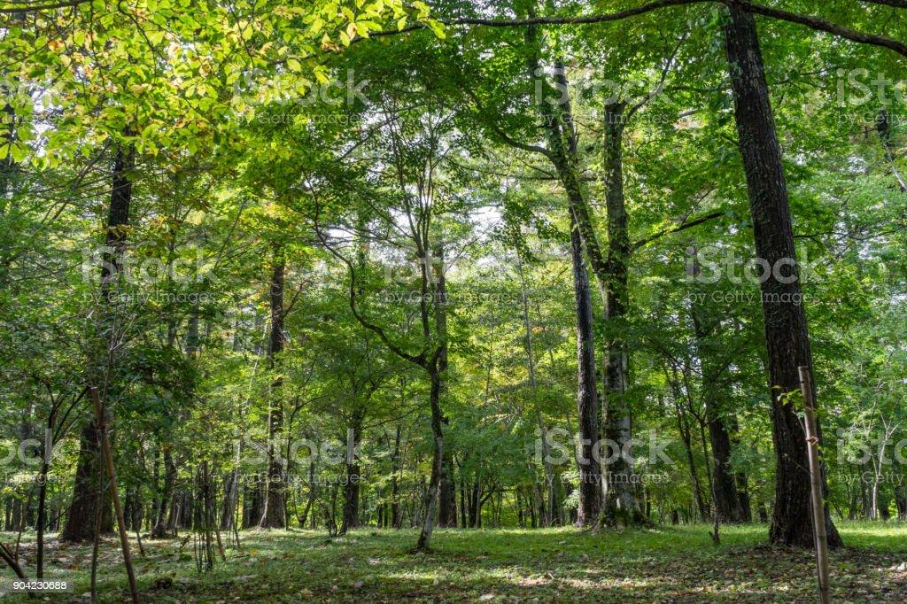 Bungaku no Mori Park Miscellaneous Forest stock photo