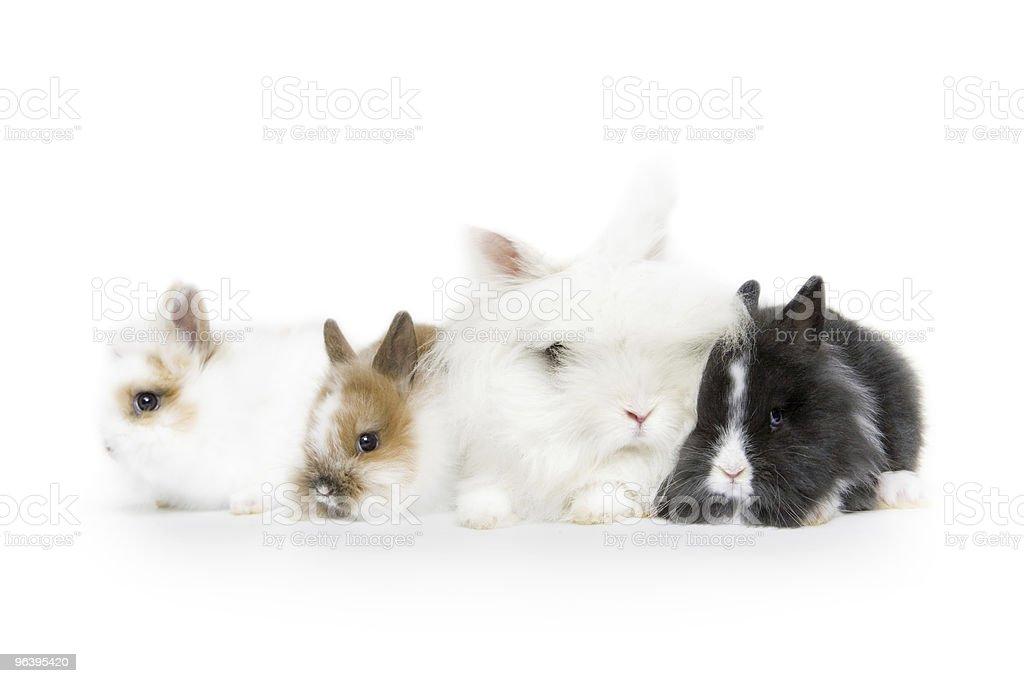 ウサギ - アナウサギのロイヤリティフリーストックフォト