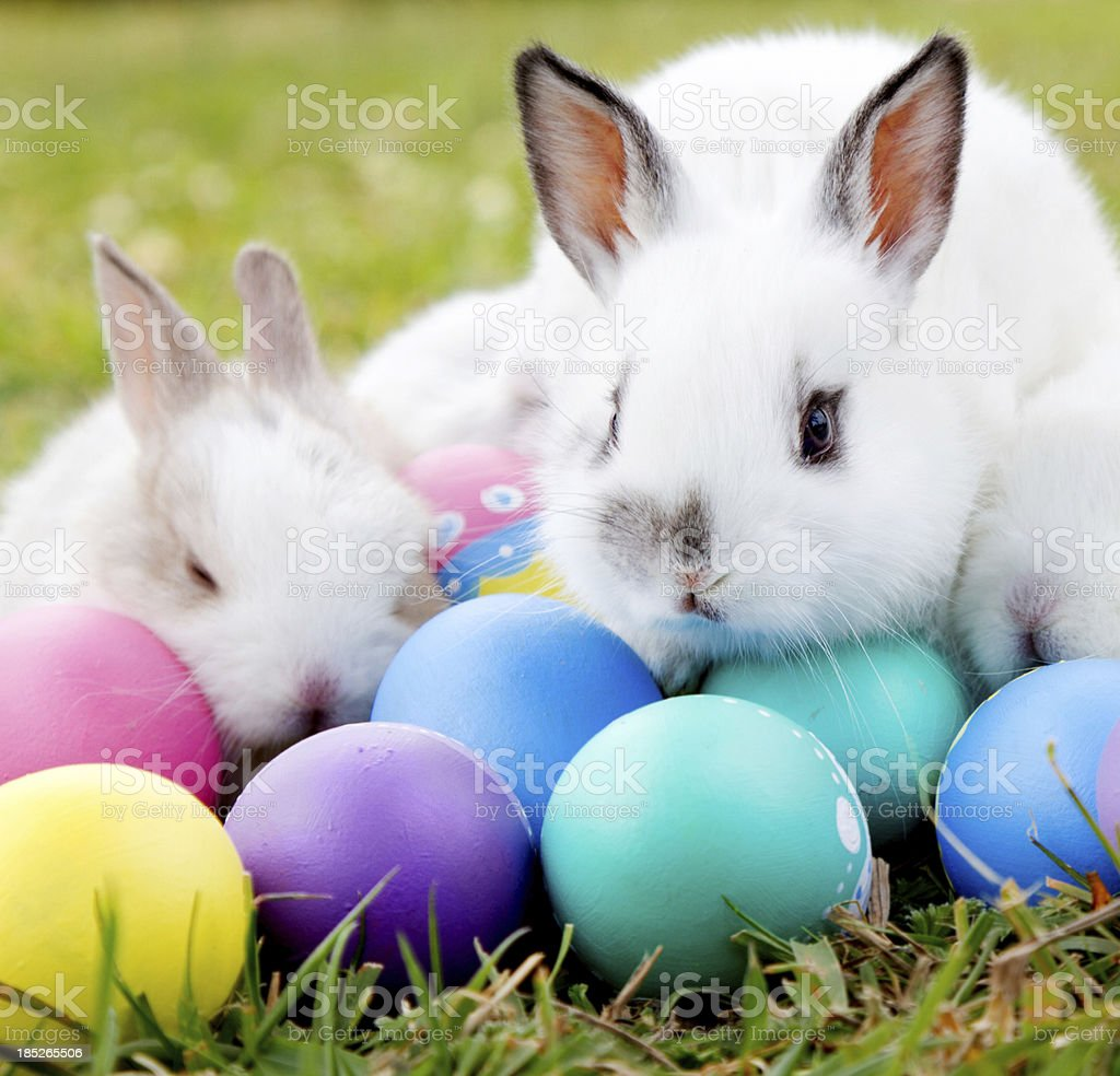 Bunnies with Easter eggs stock photo