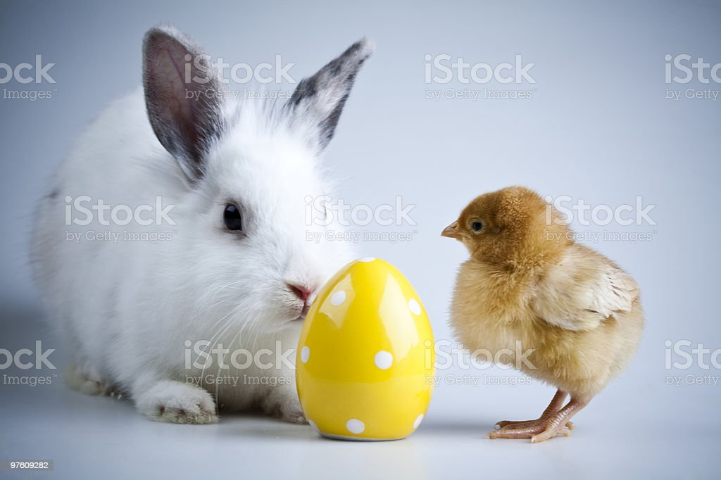 Bunny and chick royalty-free stock photo
