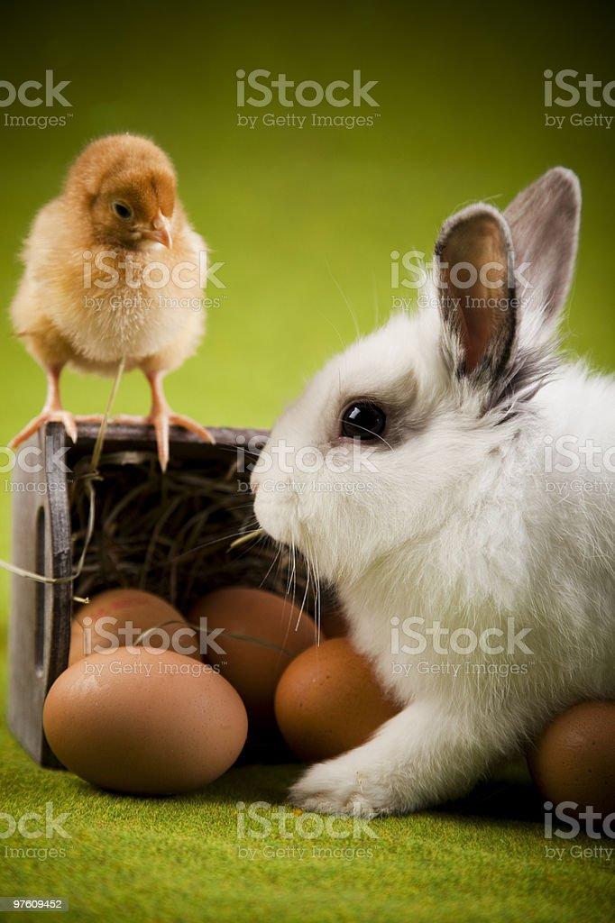 Bunny and chick royaltyfri bildbanksbilder