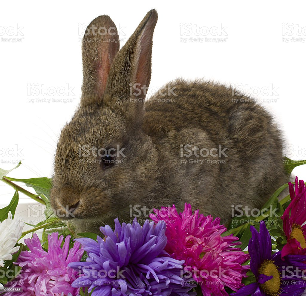 bunny and flowers royalty-free stock photo