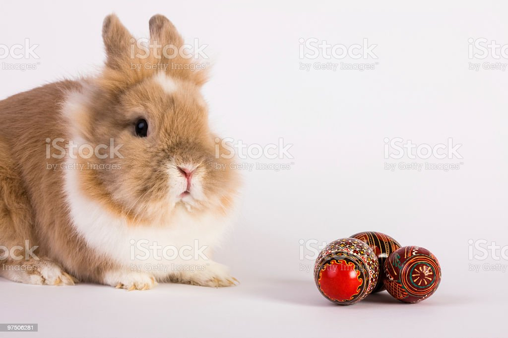 Bunny and traditional Easter eggs royalty-free stock photo