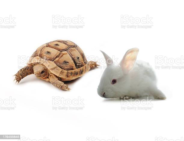 Bunny and turtle competition concept picture id176455845?b=1&k=6&m=176455845&s=612x612&h=eaxrwn5 3fwfe e4rral6asqk ev8z2wusguqsnxgiy=