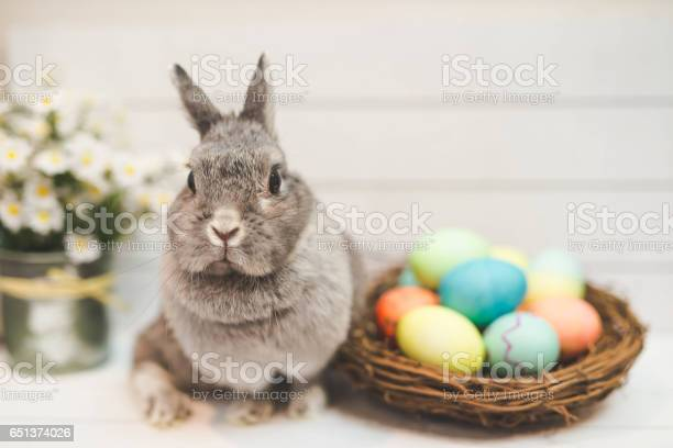 Bunny by basket of colored easter eggs picture id651374026?b=1&k=6&m=651374026&s=612x612&h=db8uxviryewvqbylthlysvyrdvmfoejrwcelm qybum=
