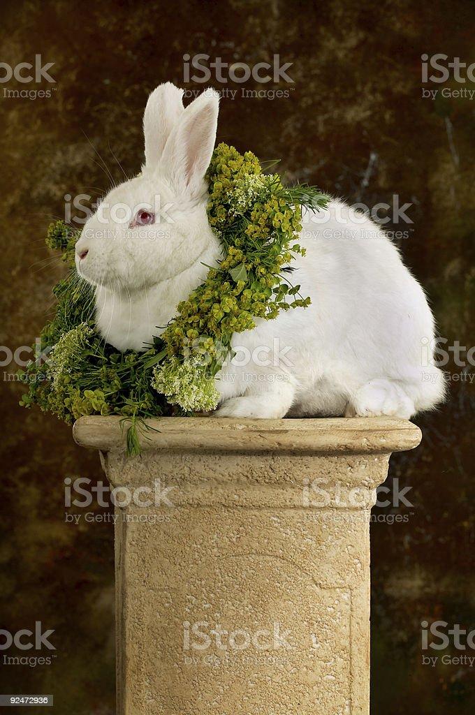 Bunny champion royalty-free stock photo