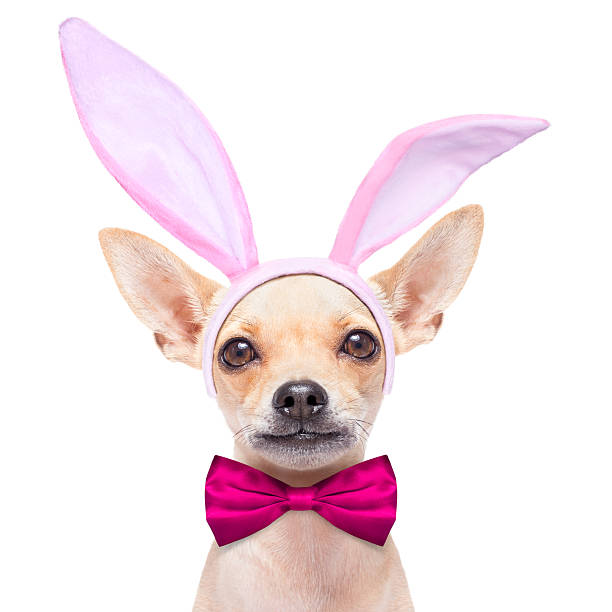 bunny ears hund - faschingssprüche stock-fotos und bilder