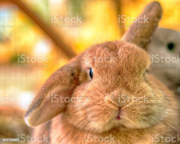 Bunny face picture id643753682?b=1&k=6&m=643753682&s=612x612&h=iiila8bygwxvslgeijrmusnfbh9it1bhkqcjbo7udck=