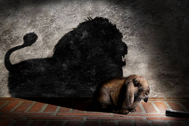 bunny has brave soul - illusion stock photos and pictures