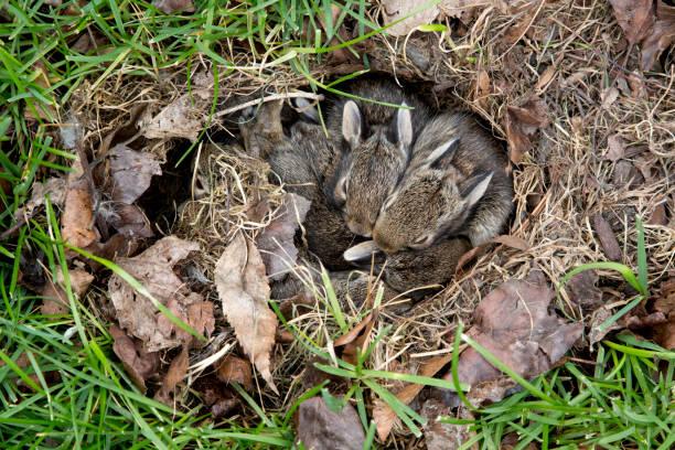 bunny hutch stock photo